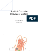 Squid and Crocodile Circulatory System