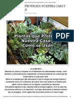 Todo Mujer_ PLANTAS QUE PROTEGEN NUESTRA CASA Y COMO USARLAS.pdf