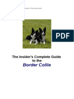 Border Collie Book007