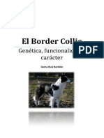 Trabajo Border Collie