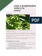 Diferencias y propiedades de la menta y la hierbabuena.docx