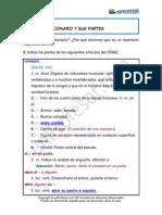 Partes Diccionario