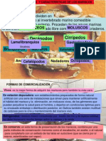 identificacion_de_los_mariscos.pdf