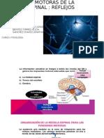 Exposicion  Fisiologia Morfo 1