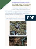 Animais Brasileiros Em Extinção