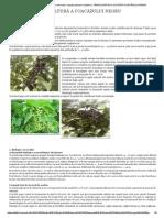 Material saditor certificat_ mur fara spin, coacaz, zmeura si tayberry_ TEHNOLOGIA DE CULTURĂ A COACĂZULUI NEGRU.pdf