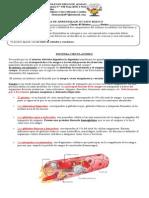 Guía de Aprendizaje Octavo Básico Sistema Circulatorio