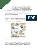 Centrómeros y Telomeros