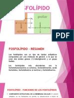 FOSFOLÍPIDO ppt