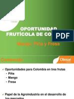 Olmué_Oportunidad Frutícola de Colombia