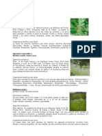 Manual Plantas Nectaríferas