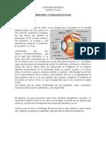 Anatomia y Fisiologia Ocular