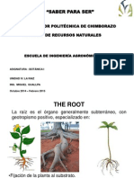 The Root and Classification