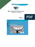 Foto Identificação de Baleias-jubarte