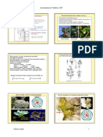 FAMILIAS FORMULAS FLORALES.pdf