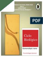 Ciclo de Hymenolepis
