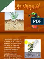Nutricion y Crecimiento en Plantas