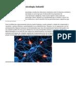 Carrera De Neuropsicologia Infantil