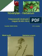 Növényfelismerés - Herbárium - Frissített