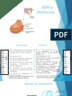 ADH y Oxitócina.pptx