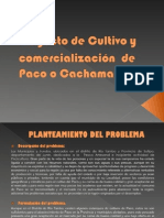 Proyecto Paco - copia.ppt