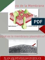 Bmc 4 Estructura de La Membrana2