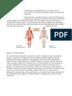 sistemas vertebrados.docx