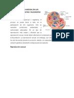 Reproducción Asexual en Las Celular Procariotas y Eucariotas