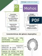 MOHOS