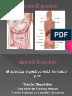 Sistema Digestivo -Cruzado, Melo, Vargas, Braida (1)