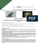 Psitacosis - Características de La Enfermedad - Algoritmo de Trabajo