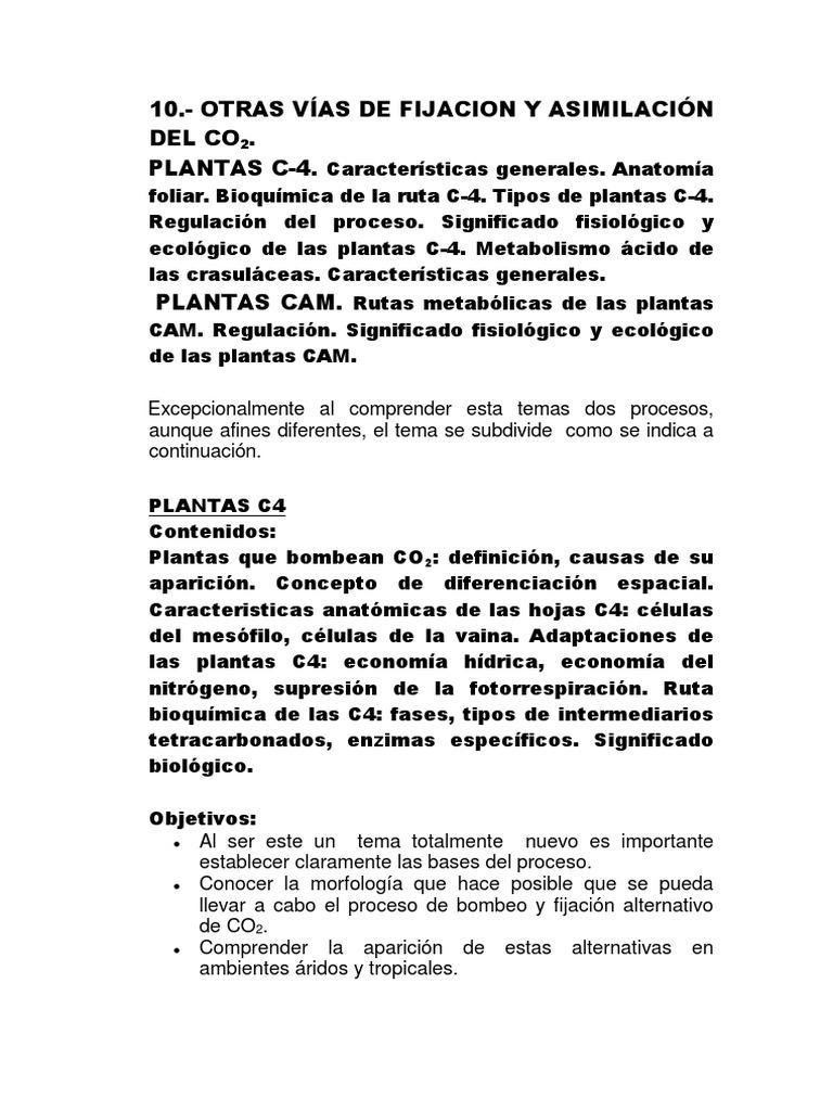 Anatomía Tipo de Plantas