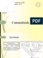 Commelinids- Taxonomia Vegetal