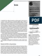 P2-C06 - Mecanismos genéticos básicos