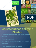 Reino Plantae 11