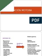FUNCIÓN MOTORA.pptx