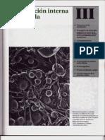 P3-C10 - Estructura de La Membrana