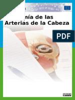 Anatomia de Las Arterias de La Cabeza CC by-SA 3.0