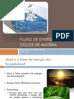 (3) Ciências Naturais - 8º Ano - Fluxo de Energia e Ciclos de Matéria