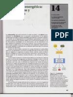 P3-C14 - Conversión energética. Mitocondrias y cloroplastos