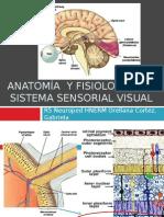 Anatomía Del Sistema Sensorial Visual