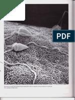 P4-C20 - Células germinales y fecundación