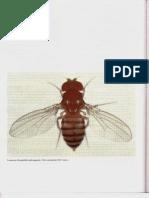 P4-C21 - Mecanismos Celulares Del Desarrollo