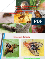 III-clase 2 Plagas Frutales 2012