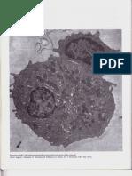 P4-C23 - El Sistema Inmunitario