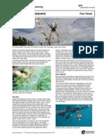 Fact Sheet Golden Orb Weavers