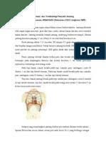Anatomi dan Patofisiologi Jantung