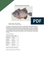 COCHITO PDF.pdf