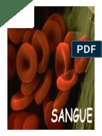 Slides Sangue fisiologia basica