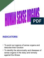 Human Sense Organs